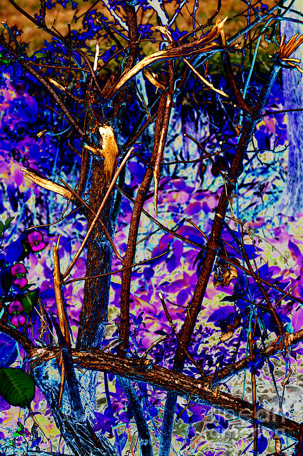 Woodland Digital Art - Woodland by Carol Lynch