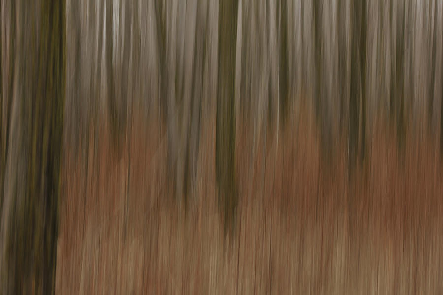 Woods Photograph - Woodland Dreams by Penny Meyers