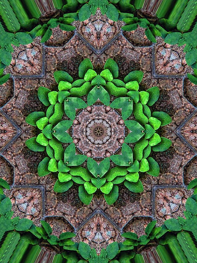 Digital Digital Art - Woodland Morning 6 by Wendy J St Christopher