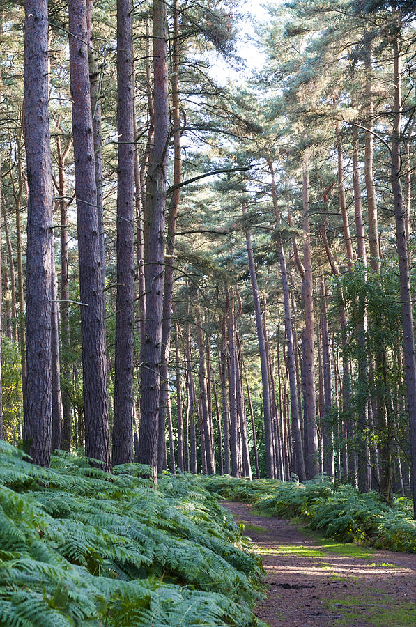 Guise Photograph - Woodland Path by David Isaacson