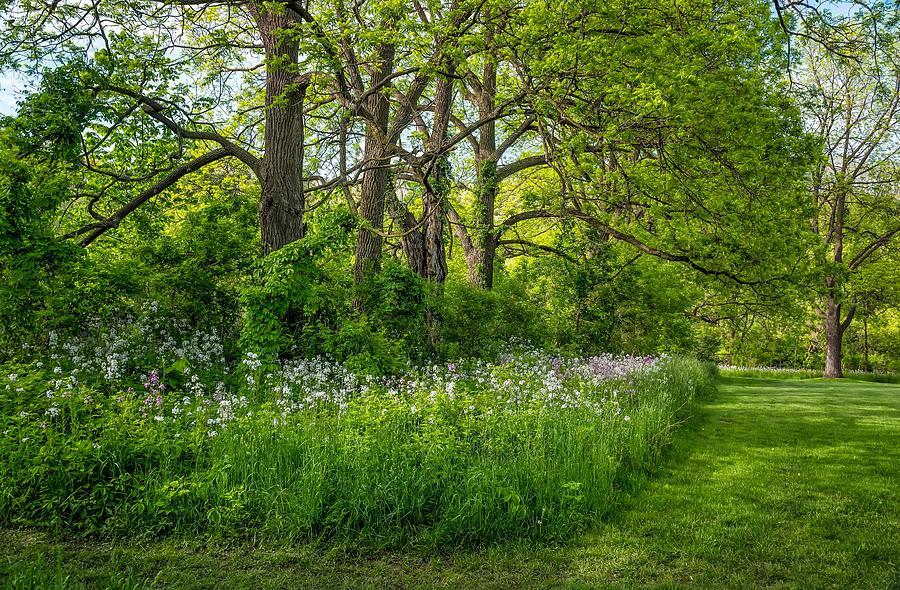 Woodland Phlox Photograph By Steve Harrington