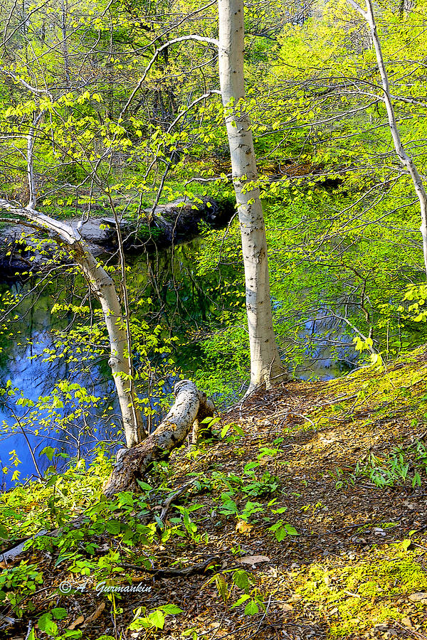 Vertical Photograph - Woodland Stream In Spring by A Gurmankin