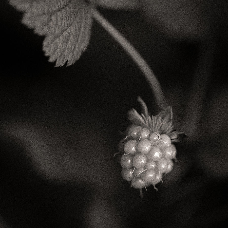 Woodland Photograph - Woodland - Study 10 by Dave Bowman