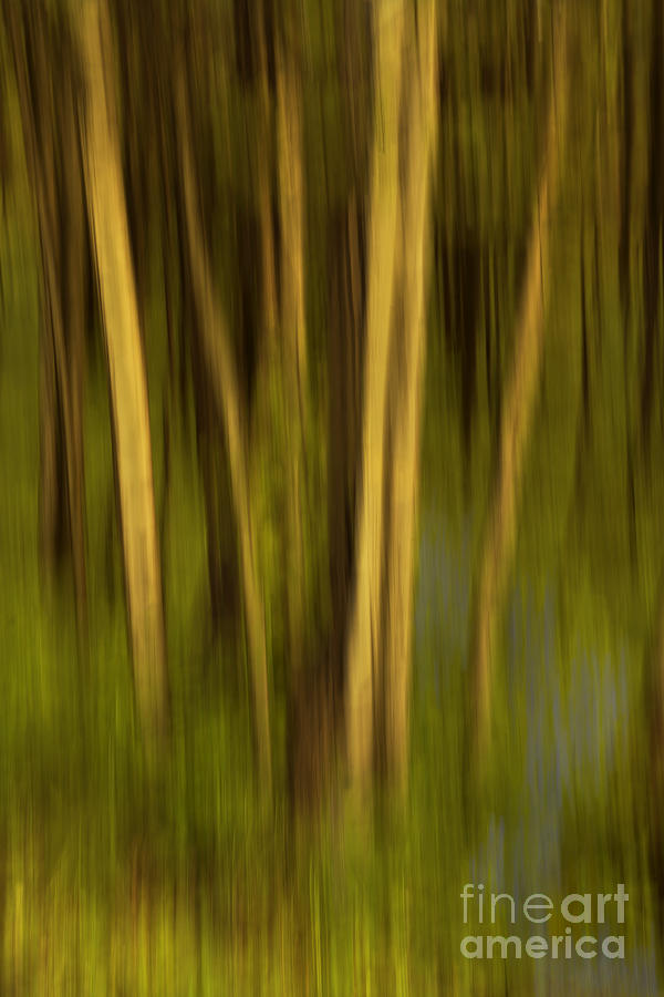 Woodland Tapestry Photograph