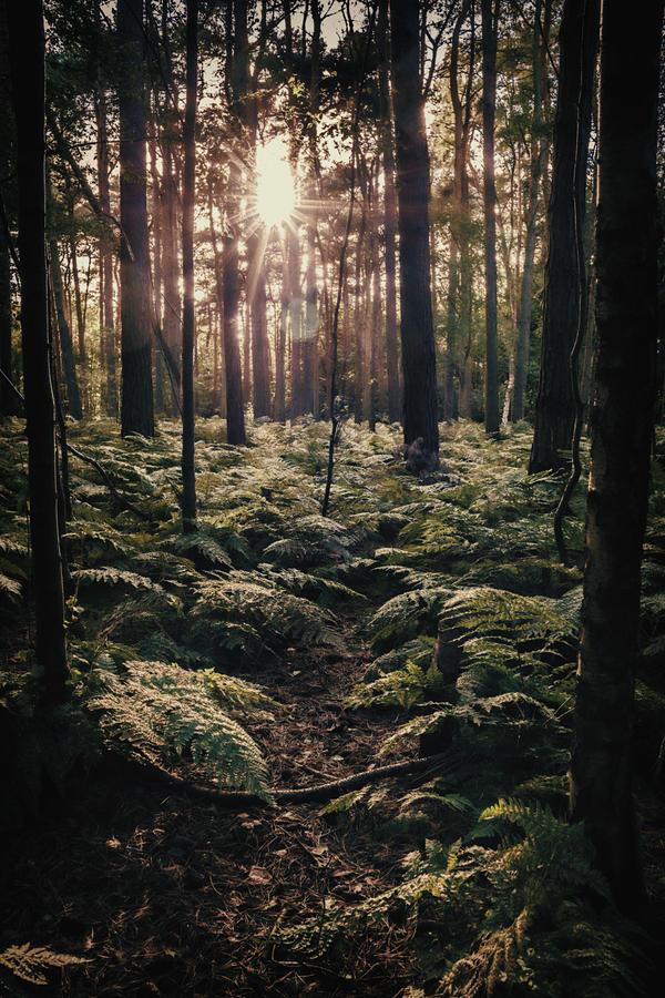 Forest Photograph - Woodland Trees by Amanda Elwell