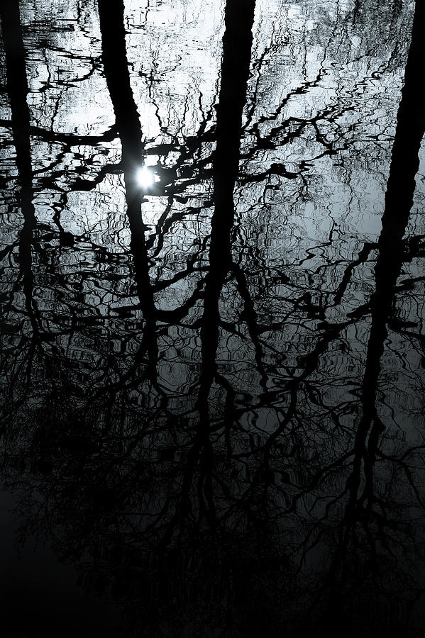 Water Reflection Photograph - Woodland Waters by Dave Bowman