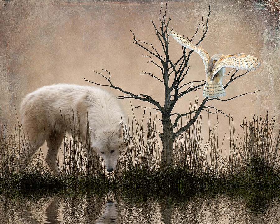 White Wolf Photograph - Woodland Wolf Reflected by Sharon Lisa Clarke