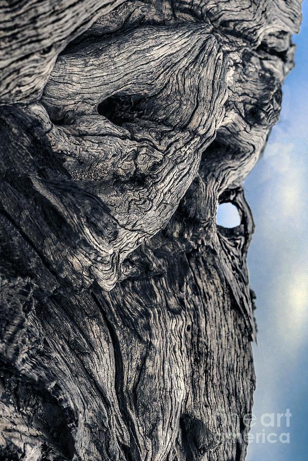 Woodman Photograph - Woodman by Petros Yiannakas