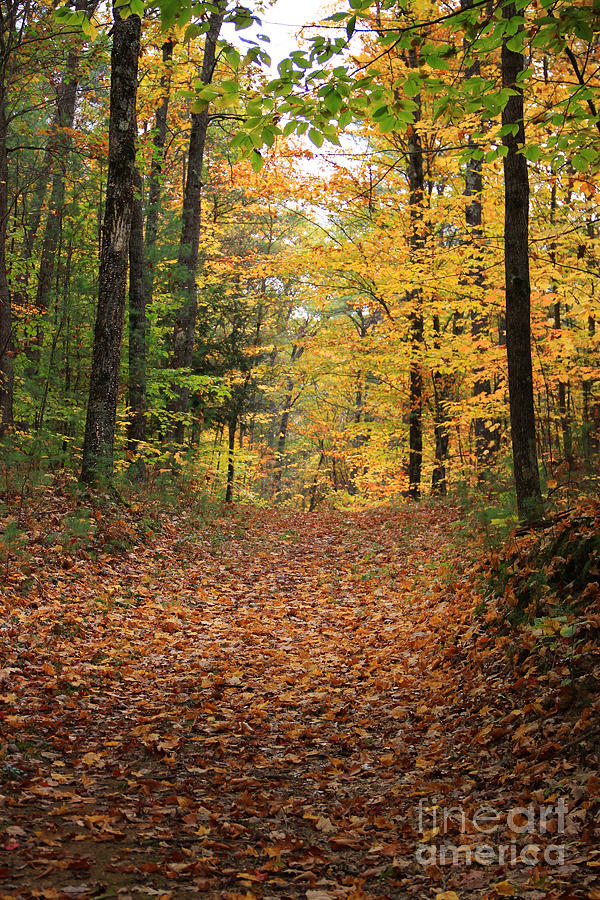 Fall Color Photograph - Woods 2 by Mike Mooney