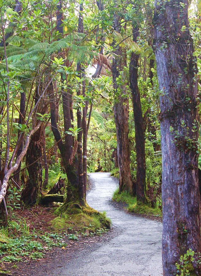 Woods Photograph - Woods by Caroline Lomeli