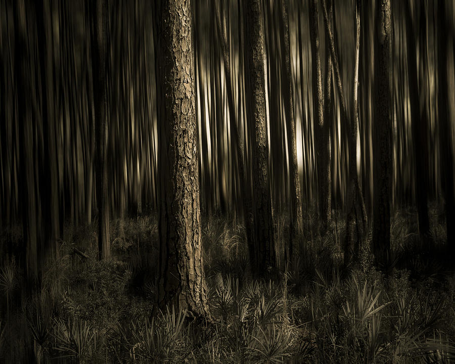 Sepia Photograph - Woods by Mario Celzner