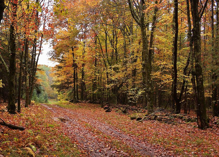 Landscape Photograph - Woods Walk by Lisa Kane