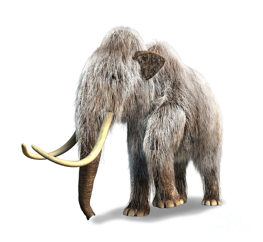 Woolly Mammoth White Background Digital Art By Leonello