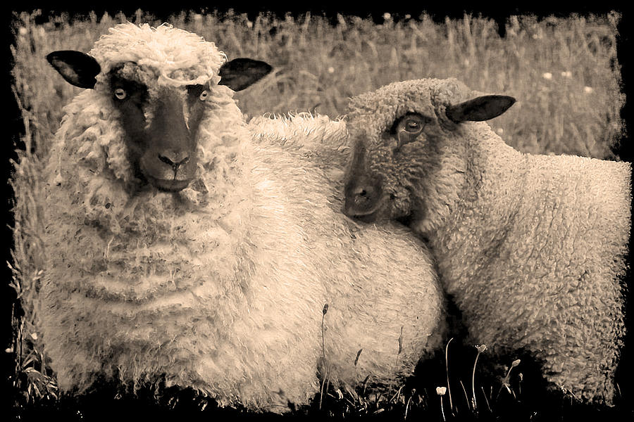 Wooly Love by Jennifer Wright