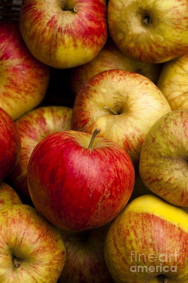 Apple Photograph - Worcester Pearmain by Anne Gilbert