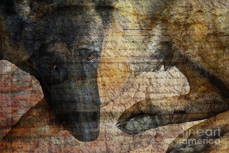 Dog Digital Art - Wordless by Judy Wood