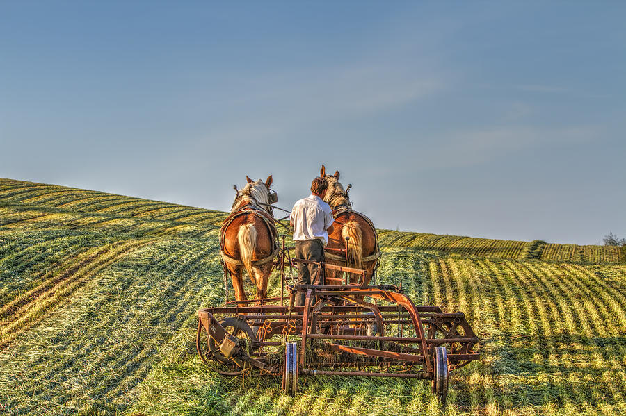 Amish Photograph - Work Horses by Deborah Penland