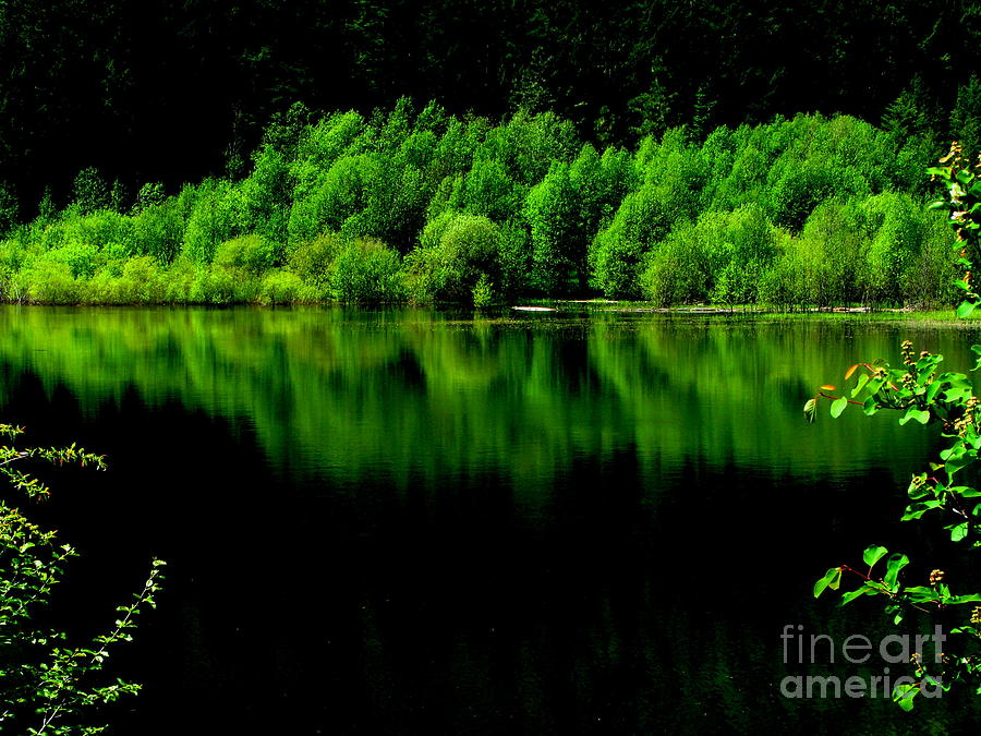Rock Lake Photograph - Work In Green by Greg Patzer