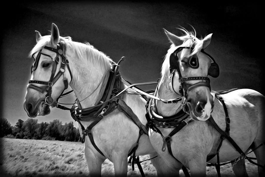 Workhorses Photograph by Williams-Cairns Photography LLC