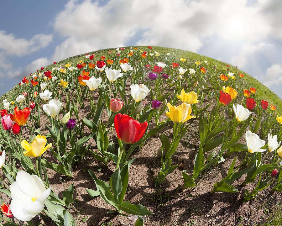 Flowers Photograph - World Of Tulips by Alexey Stiop
