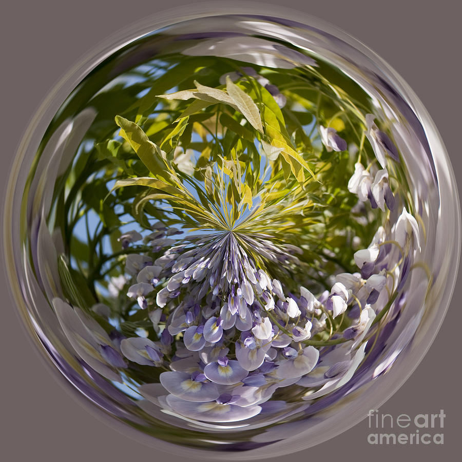 Anne Gilbert Photograph - World Of Wisteria by Anne Gilbert