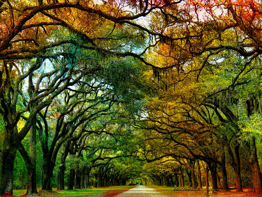 Wormsloe Plantation Photograph By Ericamaxine Price