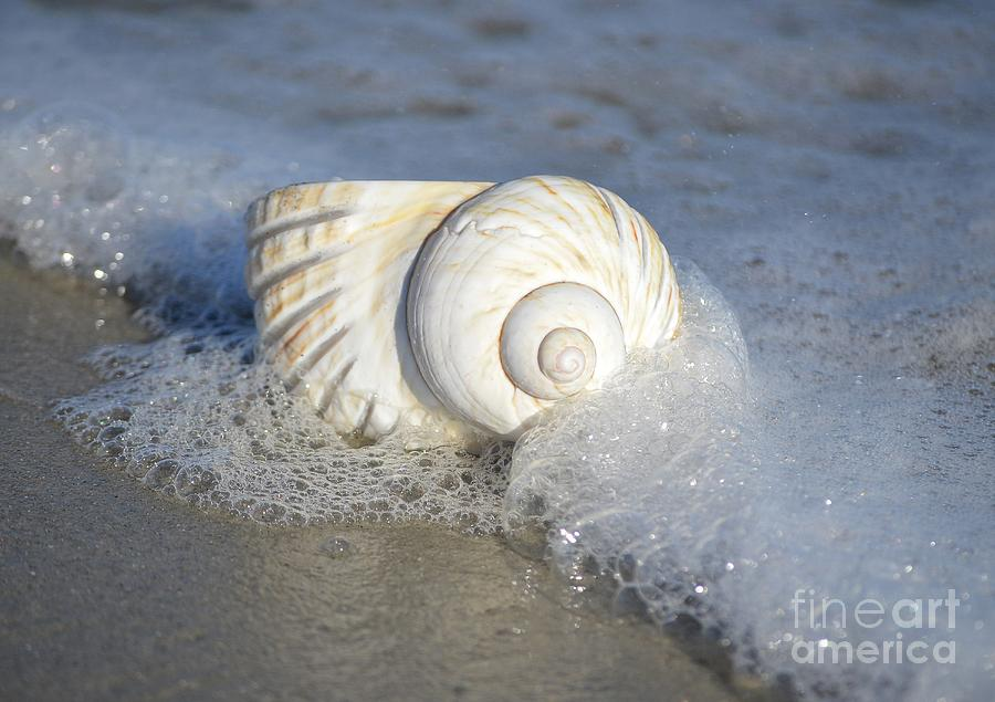Shells Photograph - Worn By The Sea by Kathy Baccari