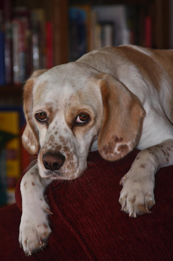 Dog Photograph - Would You Abandon Me? by Mark Alder