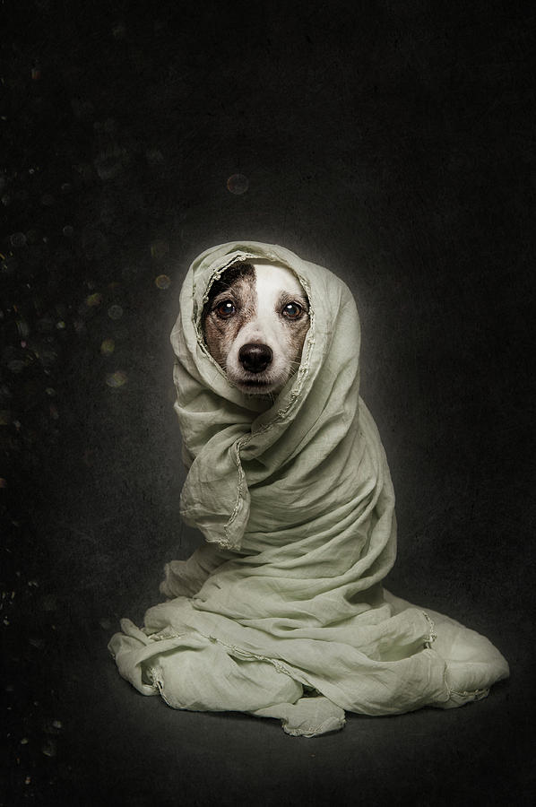 Dogs Photograph - Wrapped by Heike Willers