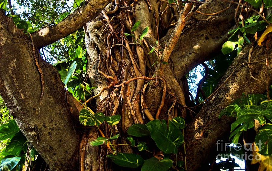 Tree Photograph - Wrapped In Vines by Claudette Bujold-Poirier