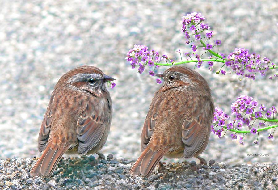 Wren Photograph - Wren Bird Sweethearts by Jennie Marie Schell