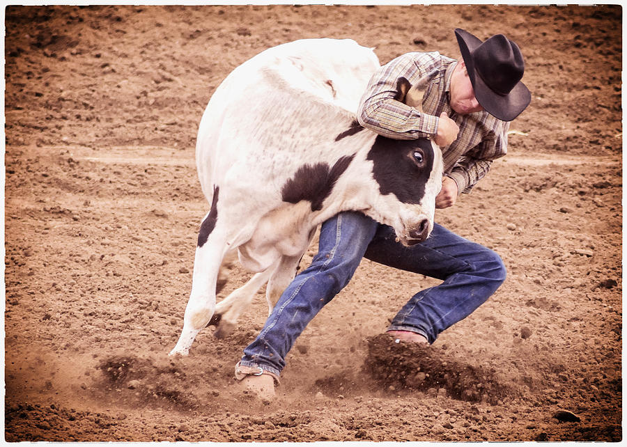 Steer Wrestling Photograph - Wrestling Match by Caitlyn  Grasso