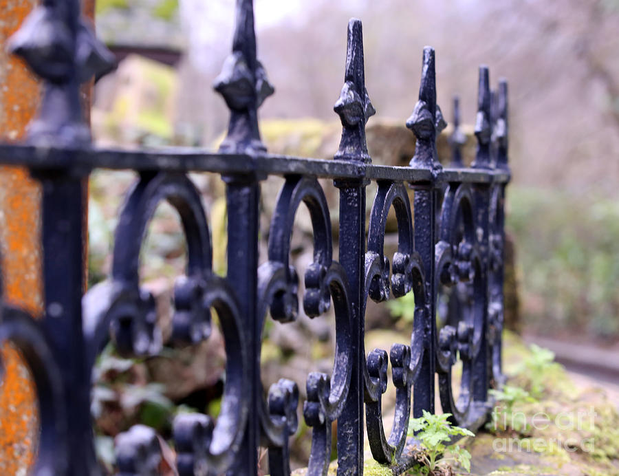 Wrought Iron Photograph - Wrought Iron Fence 1 by Kate Purdy
