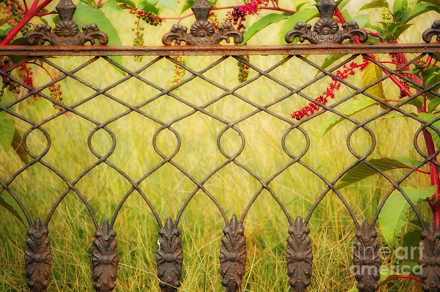 Fence Photograph - Wrought Iron With Red And Green by Kathleen K Parker