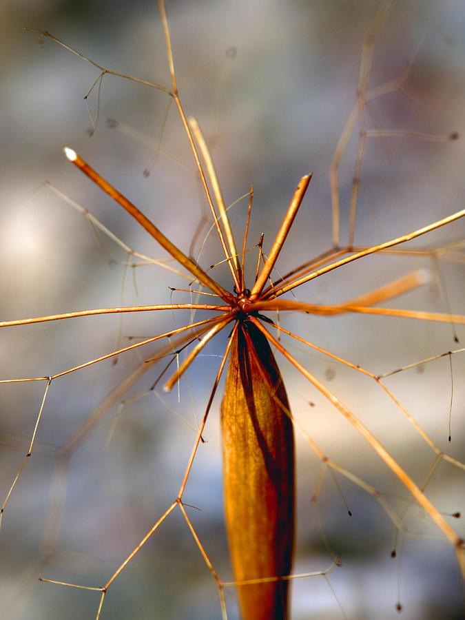 Flora Photograph - Wth? by Joe Schofield