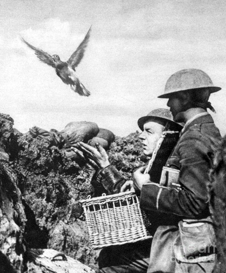 World War I Facts: 48 Facts about World War I ←FACTSlides→ |Wwi Messenger