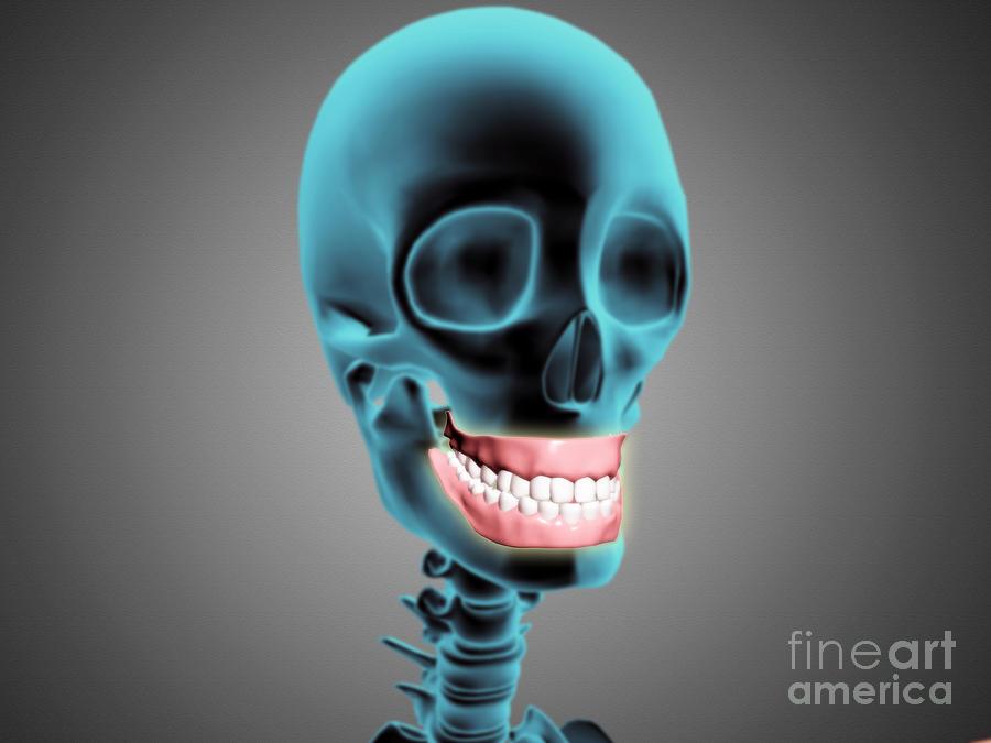 Medical Digital Art - X-ray View Of Human Skeleton Showing by Stocktrek Images