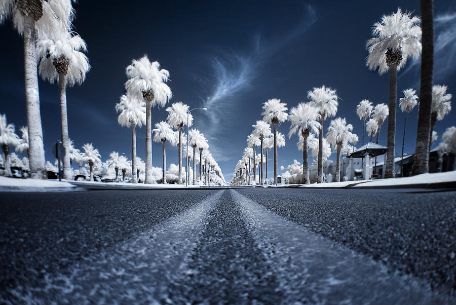 Infrared Photograph - X by Sean Foster