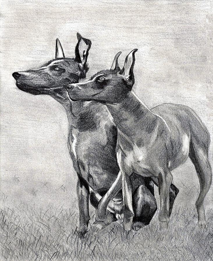 Xoloitzcuintli Dog Drawing by Olde Time  Mercantile