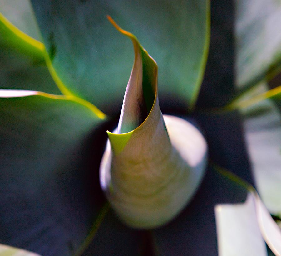 Flora Photograph - Yawn by Joe Schofield