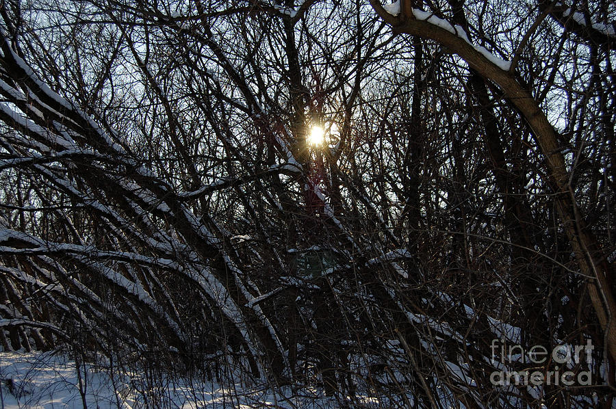 Trees Photograph - Yearning For Spring By Jammer by First Star Art