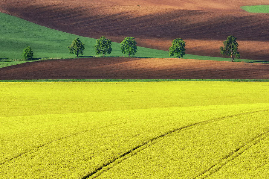 Moravia Photograph - Yellow by Ales Komovec