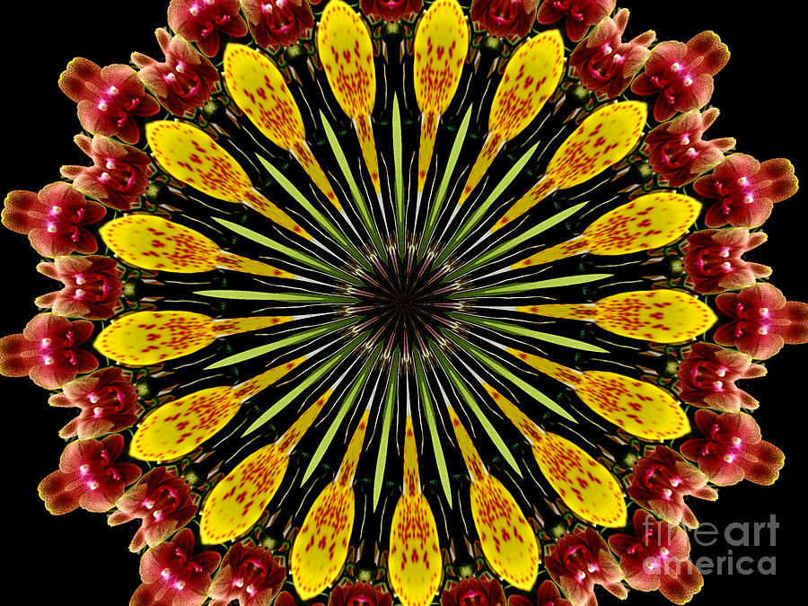 Orchids Photograph - Yellow And Apricot Orchids Kaleidoscope by Rose Santuci-Sofranko
