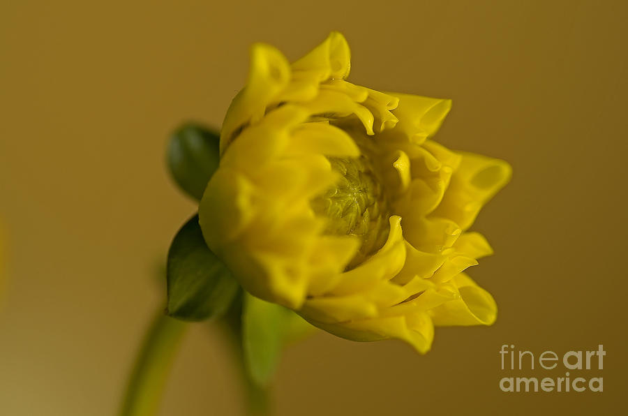 Pacific Photograph - Yellow And Green by Nick  Boren