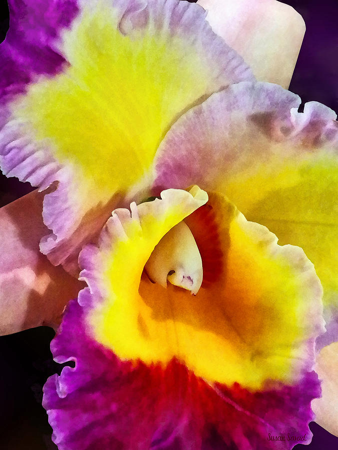 Orchid Photograph - Yellow And Magenta Cattleya Orchid by Susan Savad