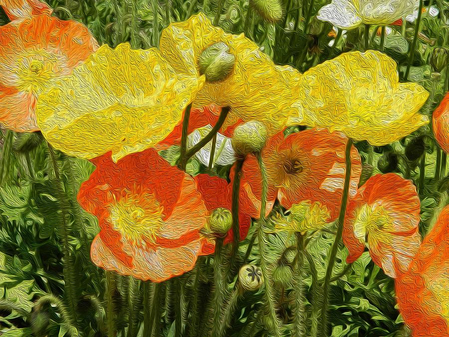 Floral Digital Art - Yellow And Orange Poppies by Dee Meyer