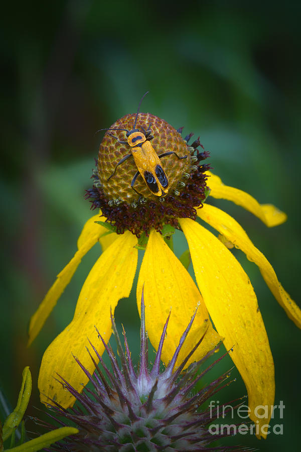 Yellow Photograph - Yellow And Yellow by Todd Bielby