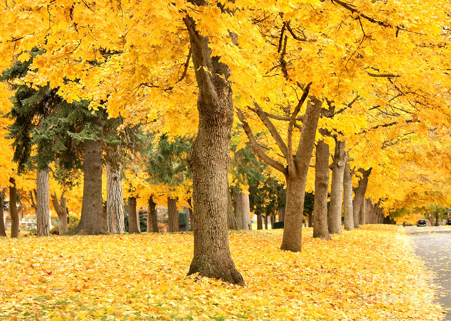 Autumn Photograph - Yellow Autumn Wonderland by Carol Groenen