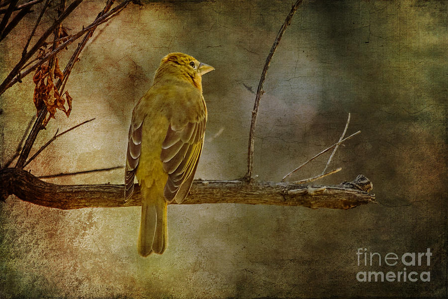 Birds Photograph - Yellow Bird Resting by Pam Vick