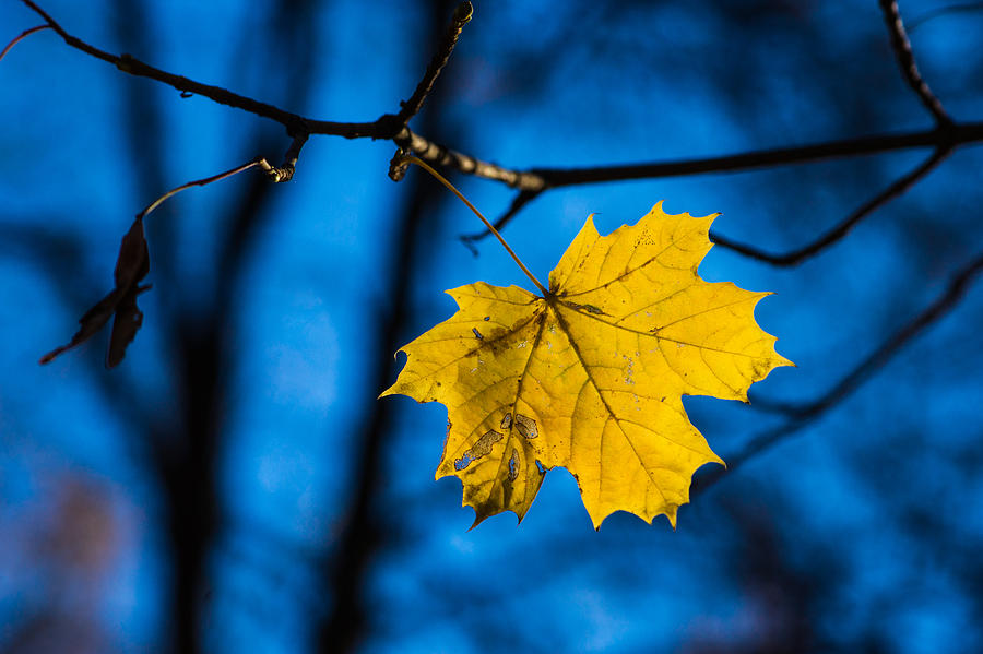 Abstract Photograph - Yellow Blues - Featured 3 by Alexander Senin